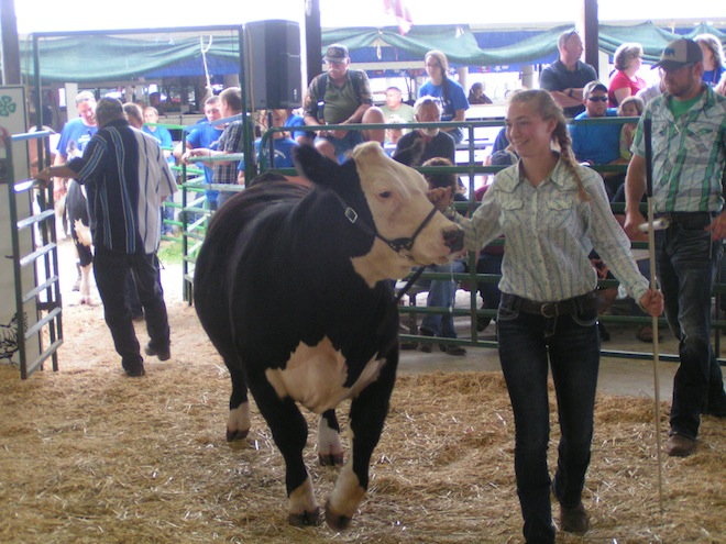 PHOTOS: County Fair Livestock Auction