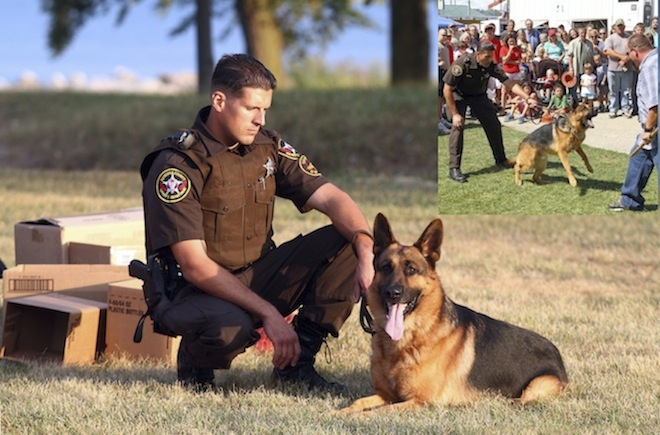 Canine deputy euthanized after sudden illness